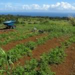 Organics of Hakalau
